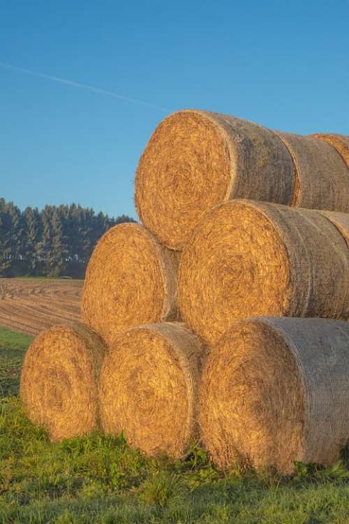 Straw Straw Bales Round Bales Agriculture Bale