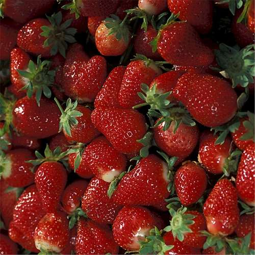 Strawberries Ripe Fruit Fresh Red Nutritious