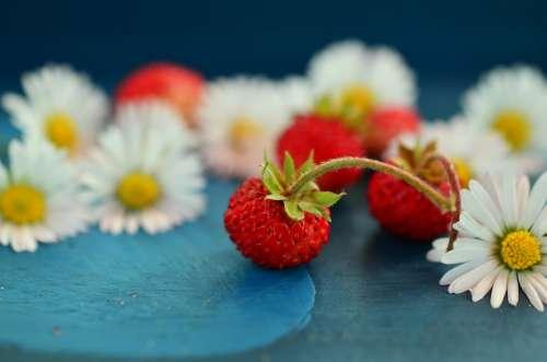 Strawberries Wild Strawberries Daisy Still Life