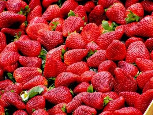 Strawberries Red Fruit Ripe Many Sweet Berries