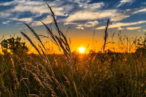 Summer Sunset Meadow Nature Landscape Sun