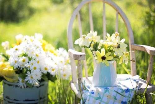 Summer Still-Life Daisies Yellow Garden Flowers