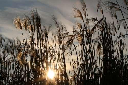 Sun Nature Grasses Sea Grass Landscape Rest