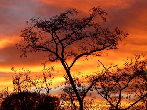 Sun Sunset Sky Clouds Colorful Color Acacia