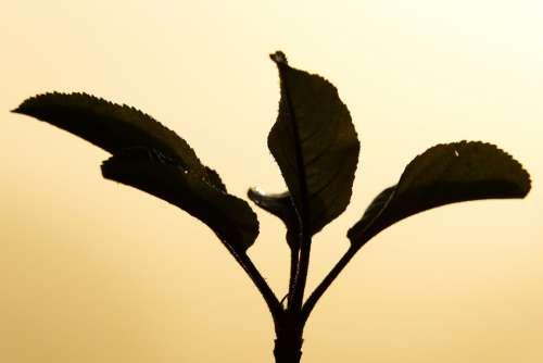 Sun Backlighting Fog Aesthetic Branches Haze Hazy