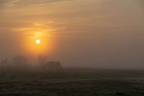 Sun Horses Fog Sunrise Grass Nature Summer