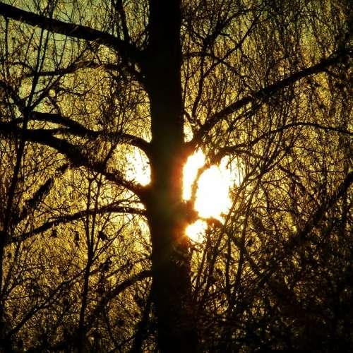 Sun Sunset Winter Bare Branches Tree Sunlight