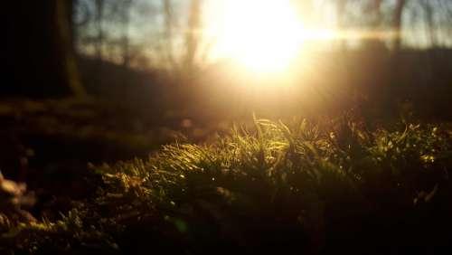 Sun Forest Moss Light Trees Green Nature Evening