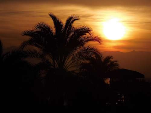 Sun Sunset Palm Trees Afterglow Vacations Sky Sea