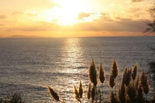 Sun Sunset Feather Duster Sea France Light
