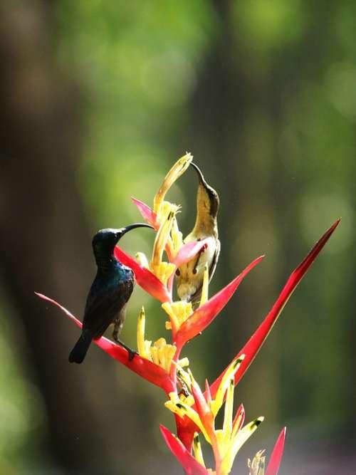 Sunbird Loten'S Sunbird Bird Avian Small Male