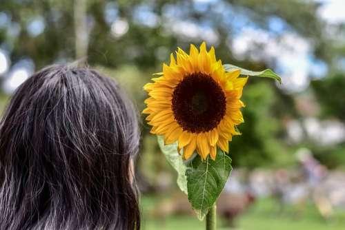Sunflower Plain Landscape Grass Nature