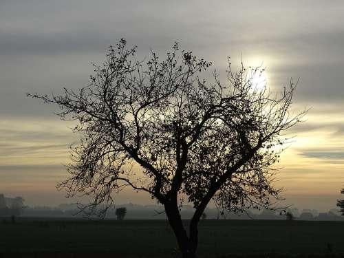 Sunrise Tree Landscape Winter Nature Silhouette