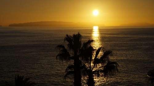 Sunrise Madeira Palm Trees Sea Horizon