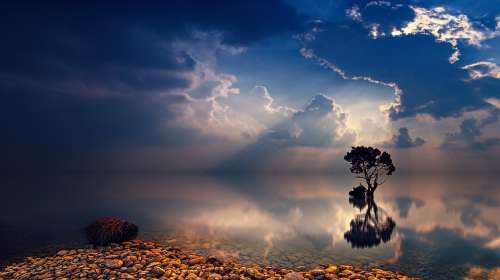 Sunset Dawn Sky Tree Sunbeam Dusk Ocean