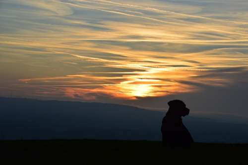 Sunset Dog Labrador Abendstimmung Silhouette Dusk