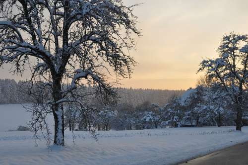 Sunset Tree Wintry Black Forest