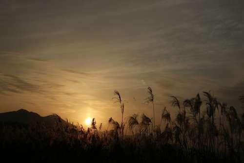 Sunset Reed Nature Glow Scenery Romantic
