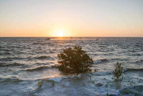 Sunset Lone Tree Waves Boat Nature Scenic