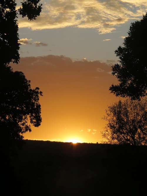 Sunset Silhouette South Africa Orange Trees