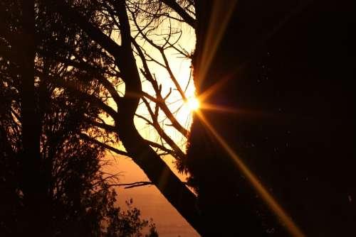 Sunset Italy Tree