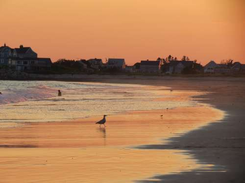 Sunset Coastline Seascape Russet