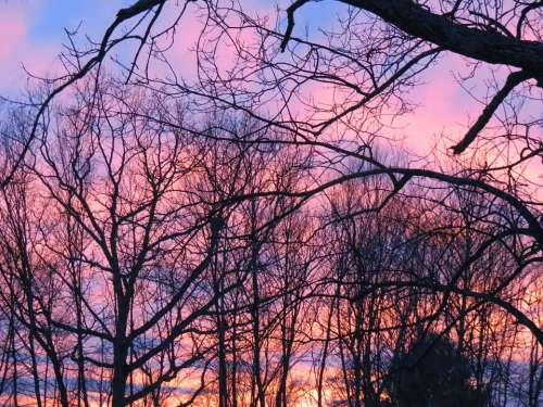Sunset Trees Sky Branches Winter