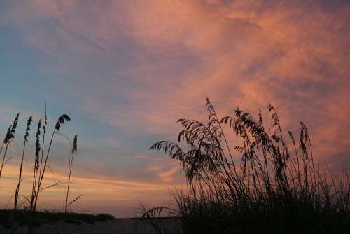 Sunset Beach Nature Sun Texture Sky Grass Colors