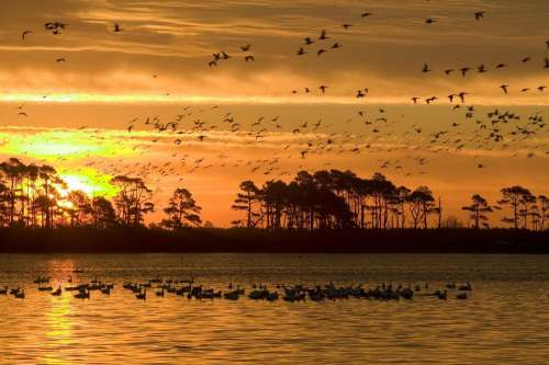 Sunset Wildlife Birds Water Silhouettes