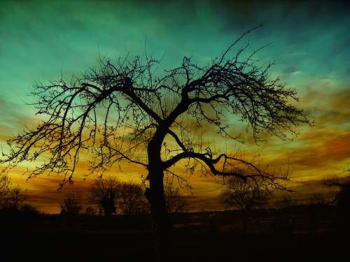 Sunset Atmosphere Clouds Mood Evening Kahl Tree