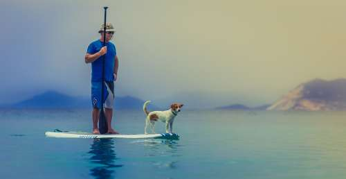 Sup Stand Up Paddling Ocean Paddle Person Pet Sea