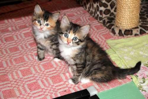 Surprise Cat Kitten Pet Animals Cute Cat'S Eye