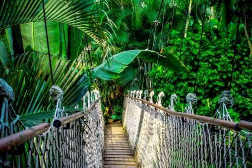 Suspension Bridge Rainforest Amazon