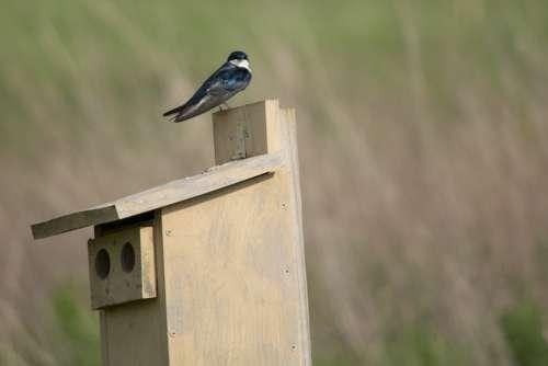 Swallow Bird Animal Nature Martin Nest Wildlife