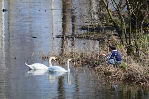 Swans Lake Friendship