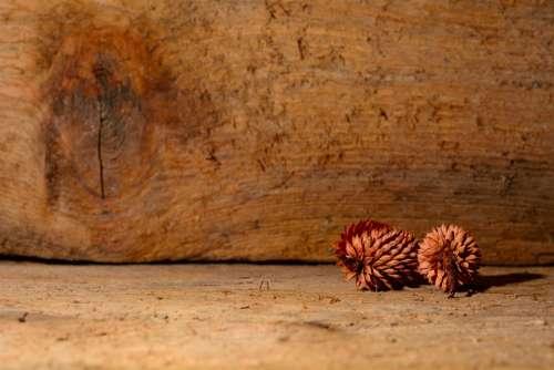 Tap Wood Nature Close Up Decoration