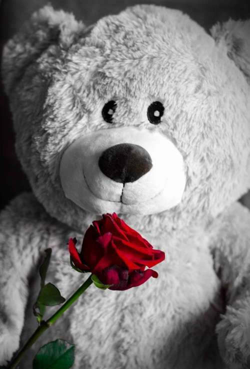 Teddy Rose Love Teddy Bear Romantic Cute