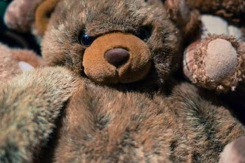 Teddy Bear Toy Cute Animal Soft Fluffy Brown