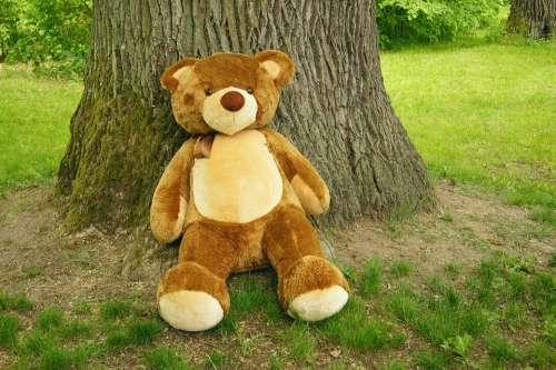 Teddy Bear Plush Nature Toy The Bear Sweet Funny