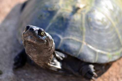 Terrapin Turtle Zurtoise Wildlife National Park
