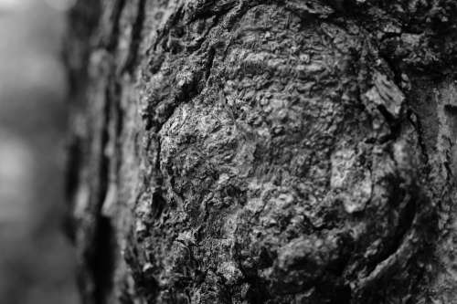 Texture Tree The Trunk