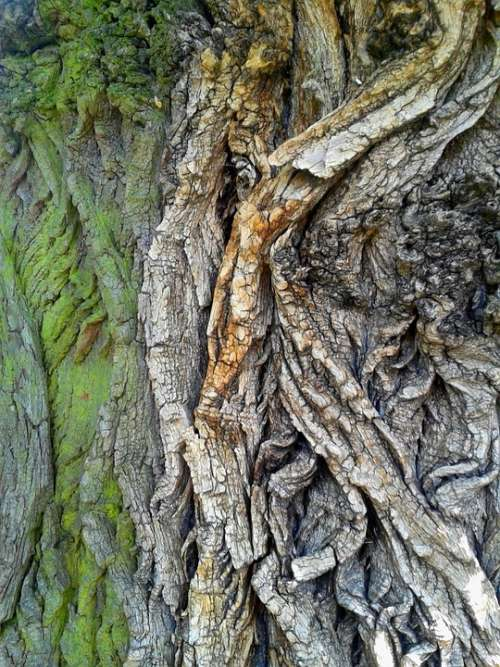 The Bark Tree Nature Forest Green Forests Wood