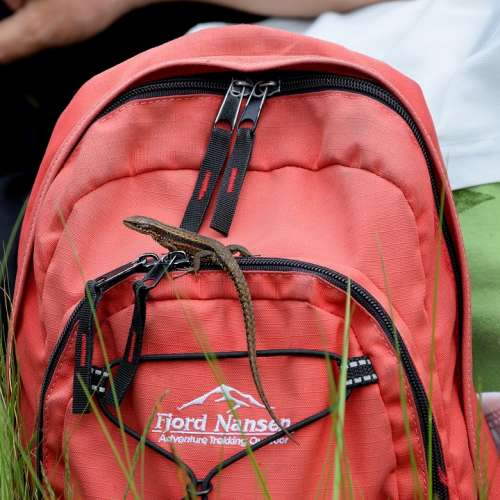 The Lizard Backpack Animal Tourism Tour