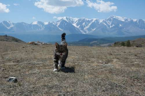The North-Chuyskiy Ridge Altai Cat Mountains Summer