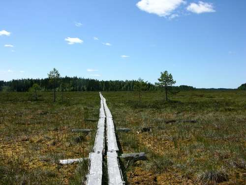 The Path Swamp Duckboards Finnish Nature Terrain