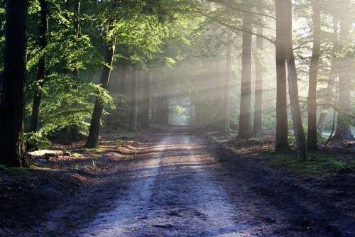 The Road Beams Path Forest Nature Silence Calm