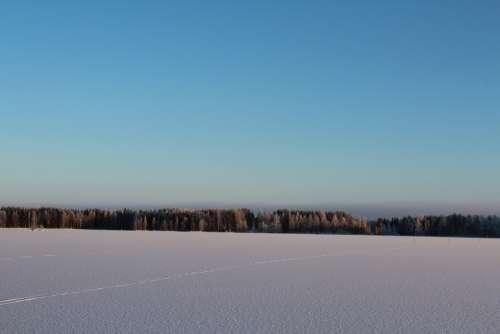 The Skyline Winter Landscape Frosty Forest