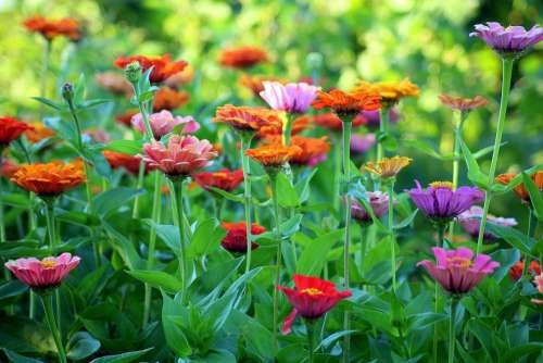 Tin Flowers Summer Garden Colorful Nature Flower