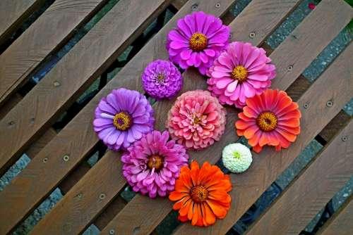 Tin Flowers Colorful Garden Nature Closeup