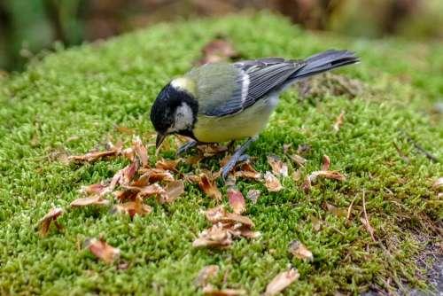 Tit Eat Autumn Nature Moss Green Forest